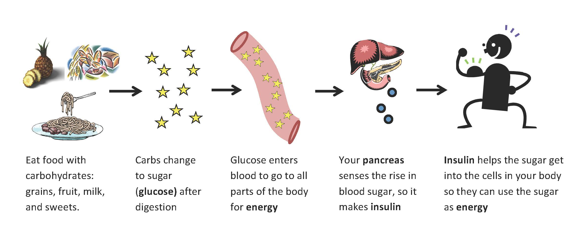 Insulin and sugar overview