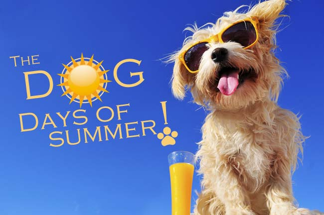 Dog-Days-of-Summer-Logo-web