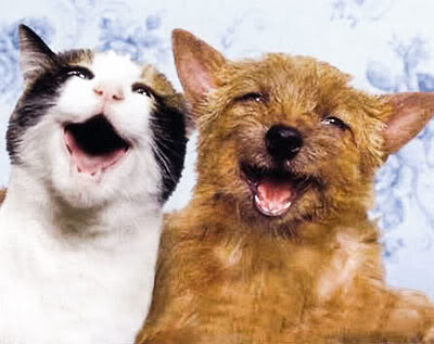 Cat-dog-smile