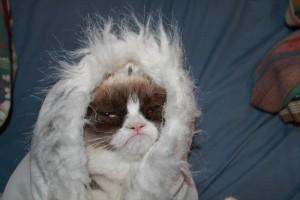 bundledcat