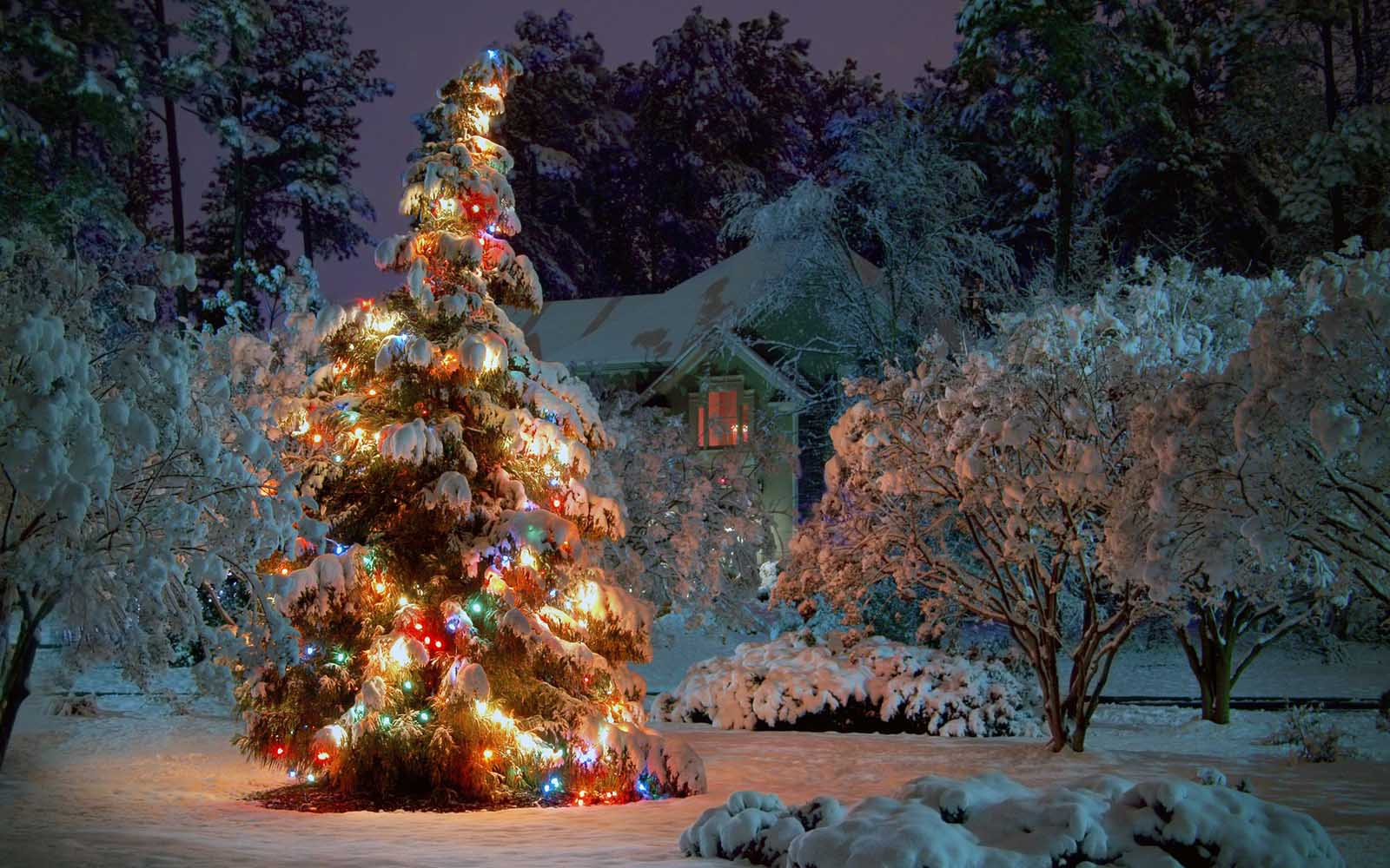 christmas-tree-decorated-with-lights-and-snow