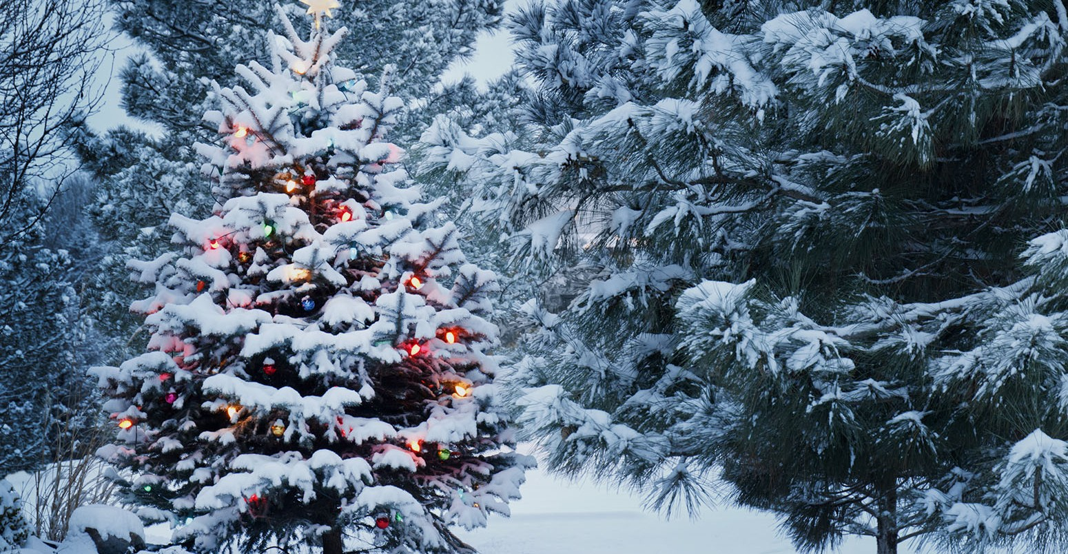 winter-snow-forest-christmas-tree-1550x804