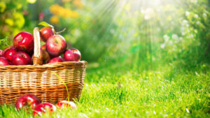 Apple-Orchards-in-India
